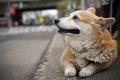 犬と泊まれるホテル…の画像
