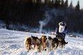 シベリアンハスキ…の画像