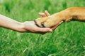 野犬の存在について…の画像