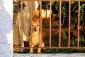 愛犬のお留守番のス…の画像