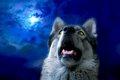 犬は夜行性ではなか…の画像
