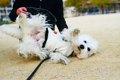 人間に慣れた愛犬が…の画像
