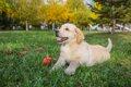 犬が臍ヘルニアにな…の画像