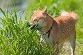 犬が草を食べて吐い…の画像