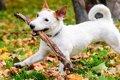 愛犬を木の枝で遊ば…の画像