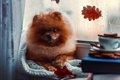 雨の日に犬の元気が…の画像