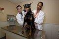 犬の健康診断、ワン…の画像