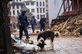 災害時に役立つ愛犬…の画像