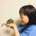 木下 明紀子画像