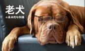 老犬を飼うときに知っておきたい基本的な知識