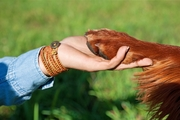 犬のお手はしつけの基本!簡単にできる教え方
