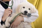 犬の死因ワースト3。代表的なワンコの病気とは。