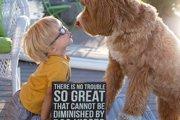 【撮影はおばあちゃん】3歳の孫と可愛い愛犬の幸せいっぱいな写真