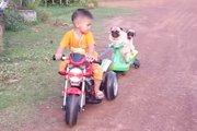 「僕も一緒に乗りたいよ~」バイクに牽引きされる2匹のパグが面白い!(まとめ)