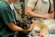 犬の巨大食道症ってどんな病気?症状や原因、なりやすい犬種とは
