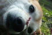 歴史とともに変わってきた『人と犬の関係』~犬という愛すべき生きもの~