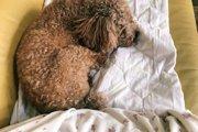 犬がお尻をくっつけてくるときの心理状態とは?