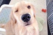 犬にオレンジ 食べていいものわるいもの