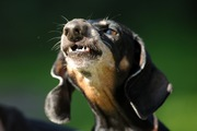 犬が食後に唸る4つの心理と対処法