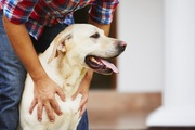 犬が幸せを感じる4つの瞬間