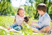 犬の軟口蓋過長症、その原因や治療法