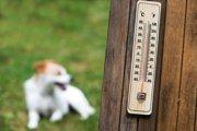 ついやってない?過度な犬の暑さ対策に要注意!
