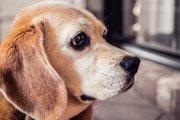 東日本大震災で取り残された犬たちの今と、震災をきっかけに始まったこと