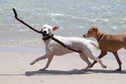犬に冷房を使う理由と上手に使うコツ