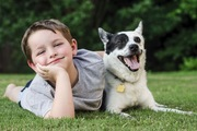 愛犬に合った迷子札をつけよう!素材の選び方から特徴まで