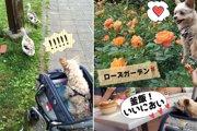 愛犬と一緒に軽井沢♡『犬を歩かせてもOK』なオシャレ庭園&ドライブの極意!