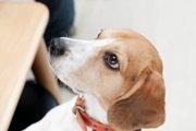 「慣れること」は犬の問題行動の抑制になる