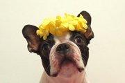 犬にとって危険な花や植物は身の回りに潜んでいる!