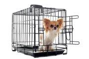 犬のハウスはどのくらいのサイズが理想的?