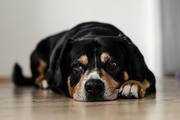 愛犬の分離不安の治し方とトレーニング