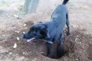 犬が砂や小石を食べてしまう理由
