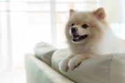 飼い主が好きすぎて起こる犬の行動4つ