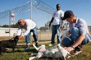 アメリカの刑務所内の動物保護施設「ペン・パルズ動物保護施設」