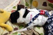 【体験談】愛犬がお留守番中に部屋の中がとんでもない事に!
