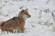 雪の日の愛犬のお散歩対策!