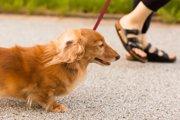 犬の散歩をしないことにより起こる4つのリスク
