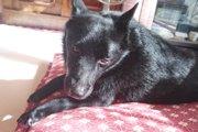 愛犬が主人の目をジッと見つめるのは何故?