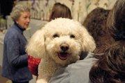 愛犬を社交的なワンコにする方法