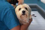 飼い主が気づきにくい、勘違いしてしまいやすい犬の病気