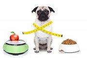 パグの平均体重と年齢による管理について