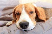 引越しで愛犬のストレスを軽減させてあげる3つの方法