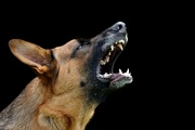 成犬の問題行動「他の犬に吠える・攻撃する」原因と改善方法~我が家の場合~
