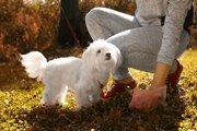 愛犬がお散歩中にしたウンチ、ちゃんと片付けていますか?