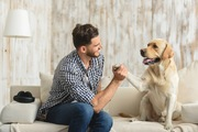 トレーニング中の犬の集中力を高める方法
