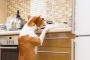 家の中でも油断大敵!室内での事故を防ぐために飼い主ができること