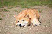 愛犬の仕草や行動から痛みの度合いを知る